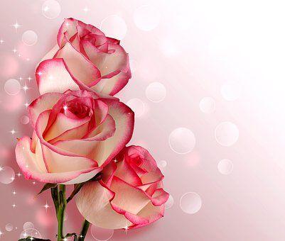 flower-3333511__340