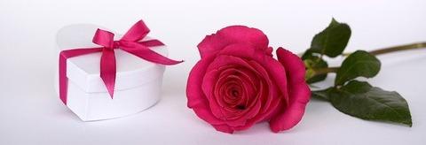 rose-2019690_640