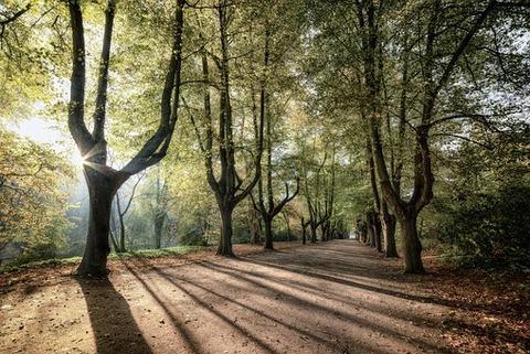trees-sunrise-3796183__340