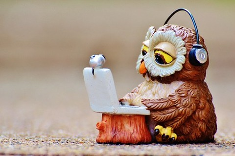 owl-947768__340