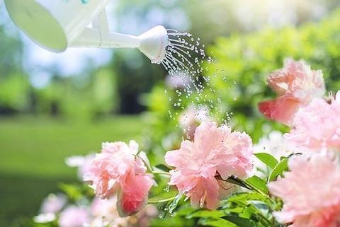 watering-2389940__340