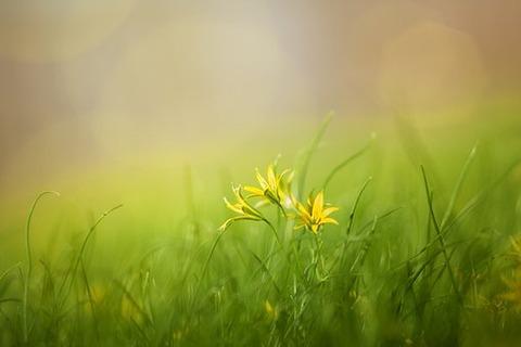 grass-3085457__340