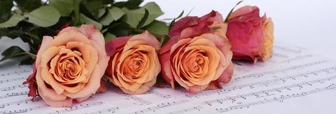roses-2366341__340