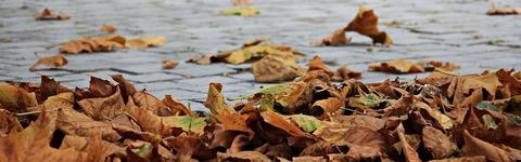 autumn-1685924__340