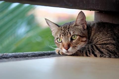 cat-4269479__340