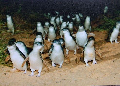 ペンギンパレード2