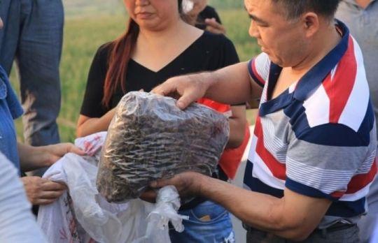 イナゴ大発生に中国人歓喜 50kg以上収穫する人も