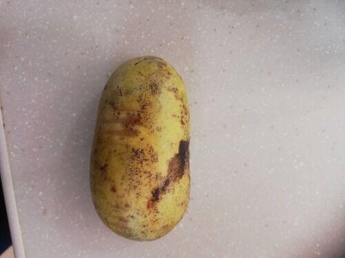 【画像あり】ポポとかいう謎の果物食べるぞwwwwwwwwwwww