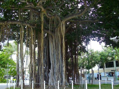 ビーチの木