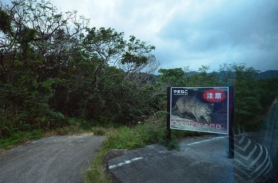 isigaki 075