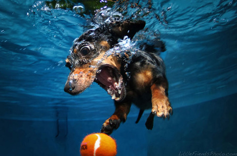 photo-of-dog-underwater-5