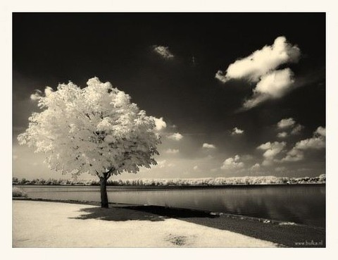 magical-trees-3