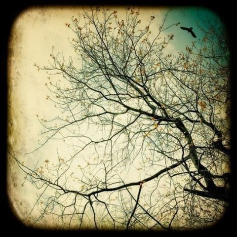 magical-trees-4