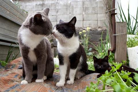 ainoshima-cats-5