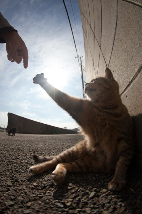 ainoshima-cats-7