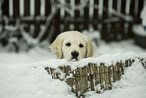 enjoy-winter-4