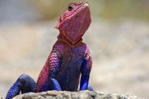 lizard_spiderman_640_04