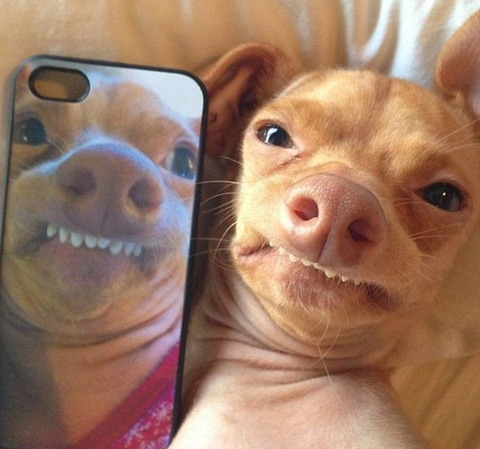 these_funny_animals_1220_640_18