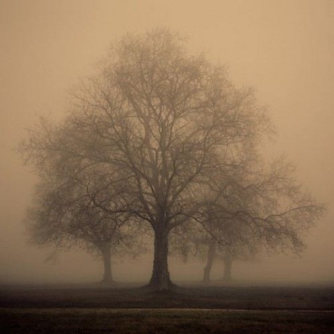 magical-trees-1