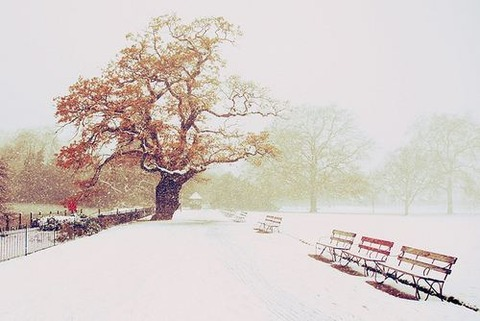enjoy-winter-12