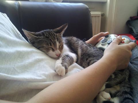 cats_mans_best_friend_21