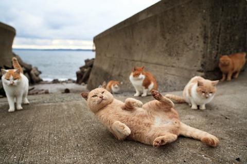 ainoshima-cats-2