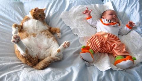sleep-cat-4