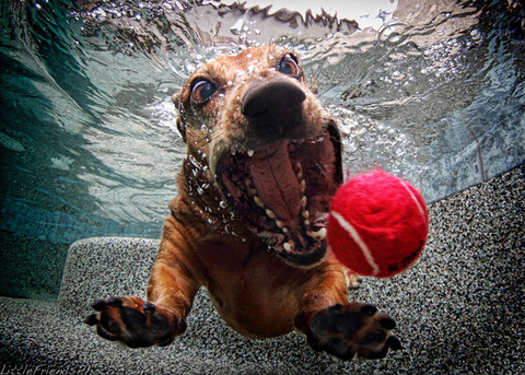 photo-of-dog-underwater-8