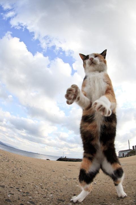 ainoshima-cats8