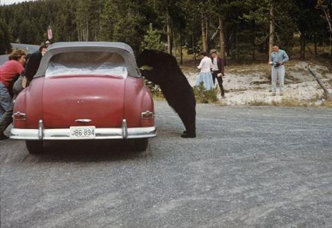 classic-cars-500-47