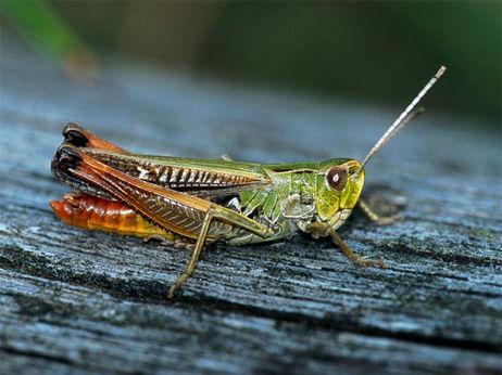 grasshopper-men-sing-louder-songs-cities_61512_big