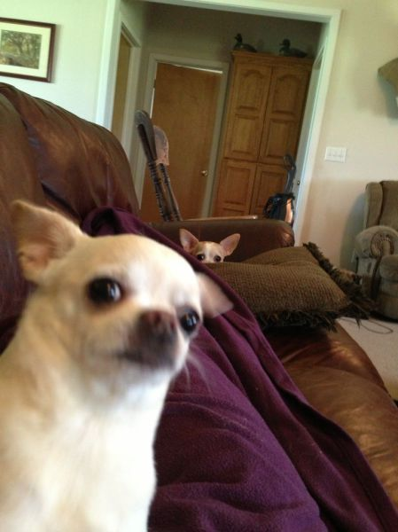 these_funny_animals_1216_640_42