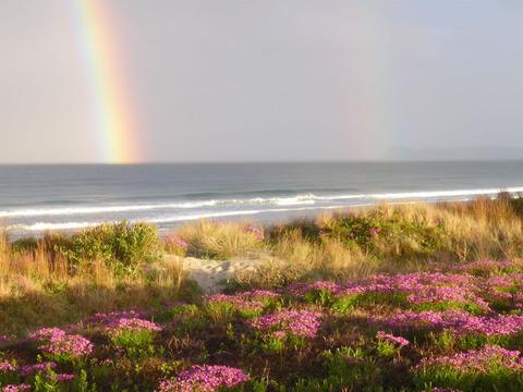 rainbows40