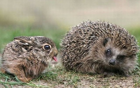 these_funny_animals_1216_640_07