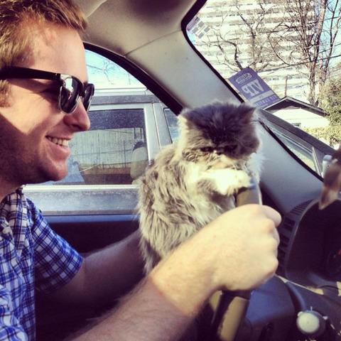 cats_mans_best_friend_3