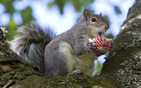 these_funny_animals_1216_640_12