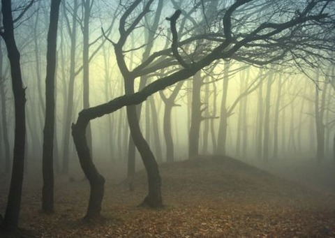 magical-trees-18
