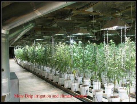 grow-house-8