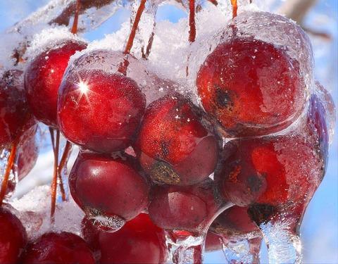 plants frozen in ice storm 16