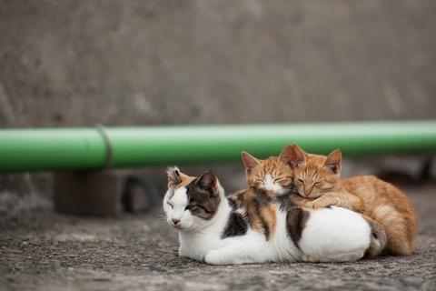 ainoshima-cats-4