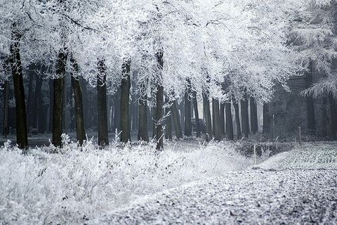 magical-trees-22