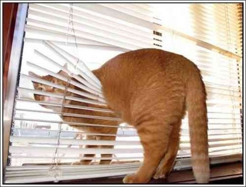 cats-and-blinds-16