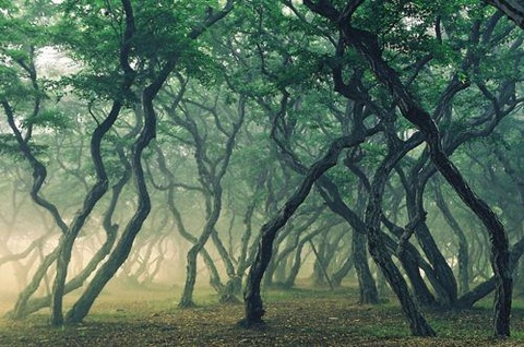magical-trees-28
