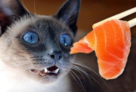 a-cats-food-2