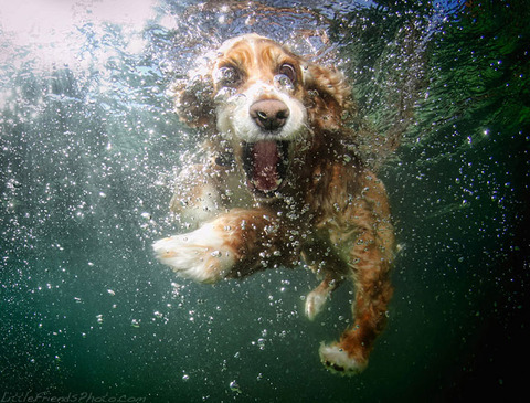 photo-of-dog-underwater-9