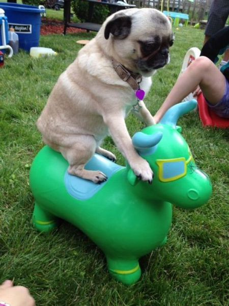 these_funny_animals_1230_640_37