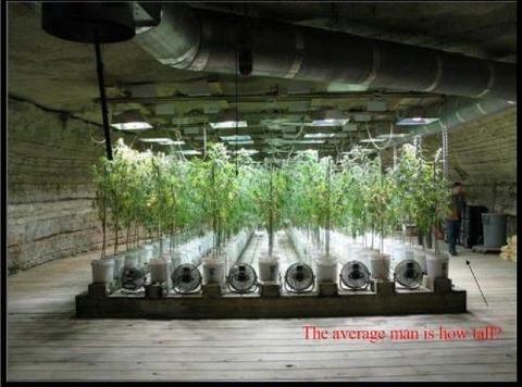 grow-house-5