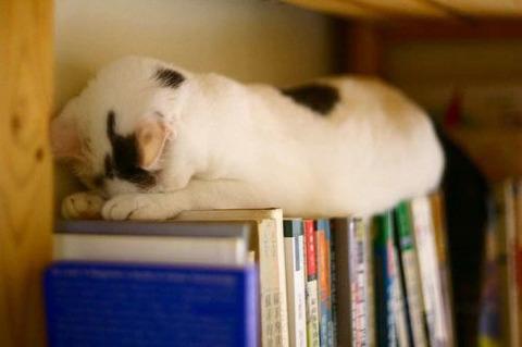 sleep-cat-6