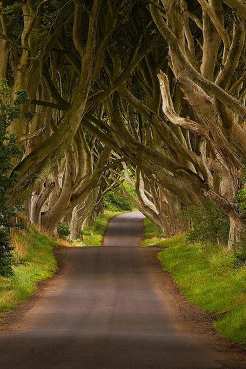 108-ireland-the-dark-hedges-d55d4856-sz400x600-animate