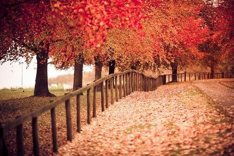 magical-trees-10